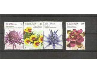 Australie ,wildebloemen 2015